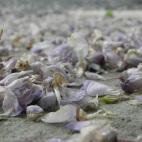 Une couverture de pétales de fleurs sur le bitume...