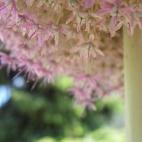... fait de mille et une fleurettes infiniment petites !