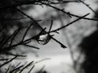 ... sous une fine pluie