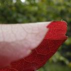 Les couleurs flamboyantes de l'automne pour surprendre encore...