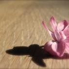 ... et papillon